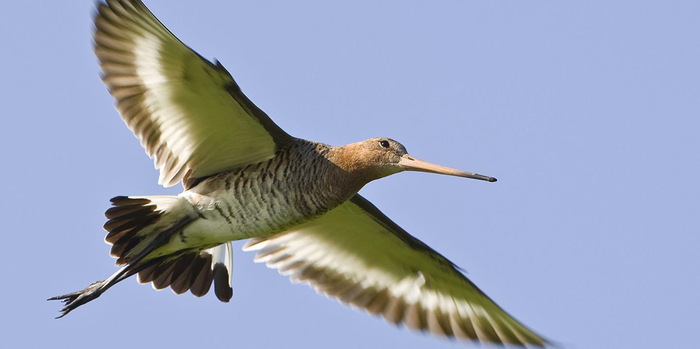 Beste Vogels herkennen app - Top 5 tips   SNP EZ-77