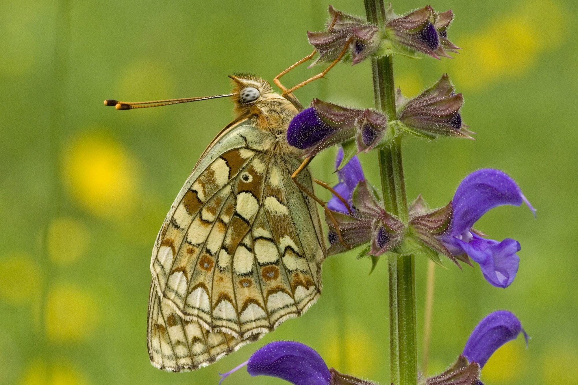 Zwitserland - Engadin - vlinderreis
