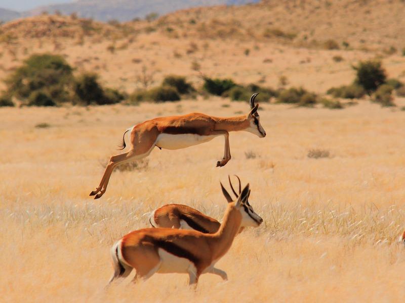 Namibië - Compleet