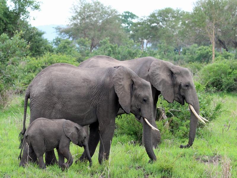 Tanzania - Selous en Mkumi