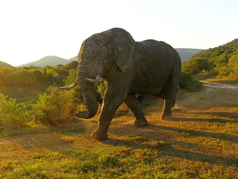 Zuid-Afrika - Van Kaapstad tot Addo