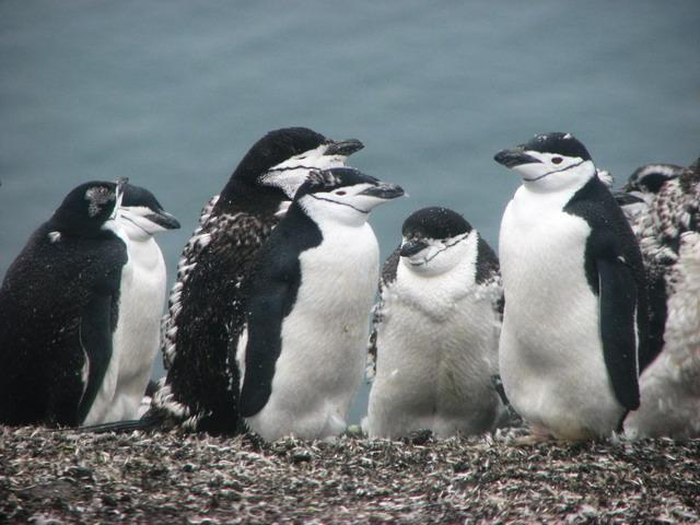 Antarctica - Natuurcruise