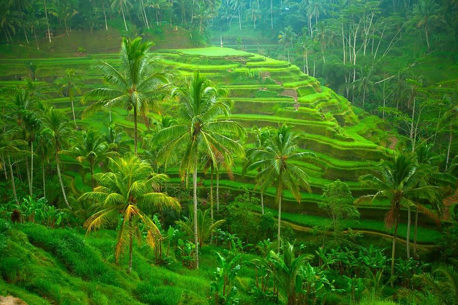 Indonesië - Bali