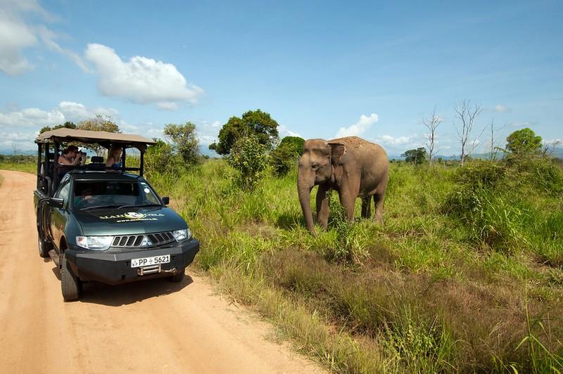 Op De mooiste reisbestemmingen op Reisbestemming.net is alles over  te vinden: waaronder sri lanka en specifiek Sri Lanka - Avontuurlijke rondreis