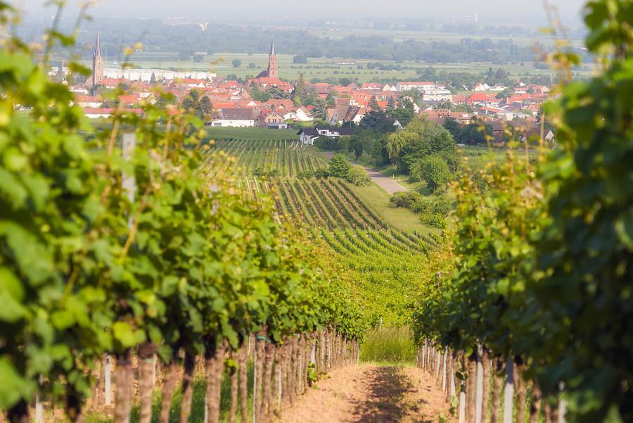 Online bestellen: Duitsland - Pfalz