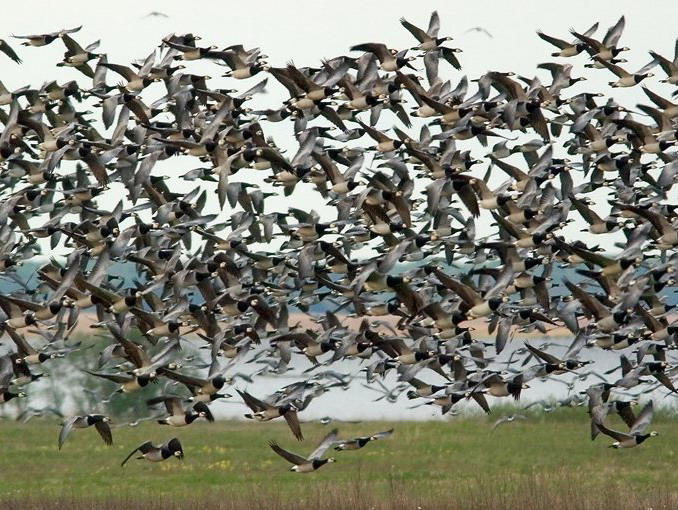 Estland vogelreis