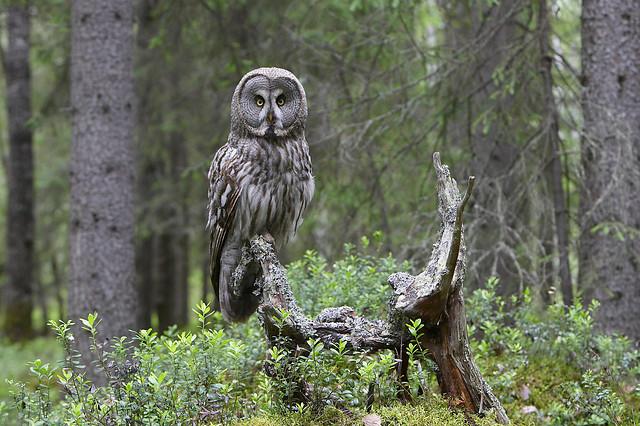 Finland - Finse taiga & Botnische Golf