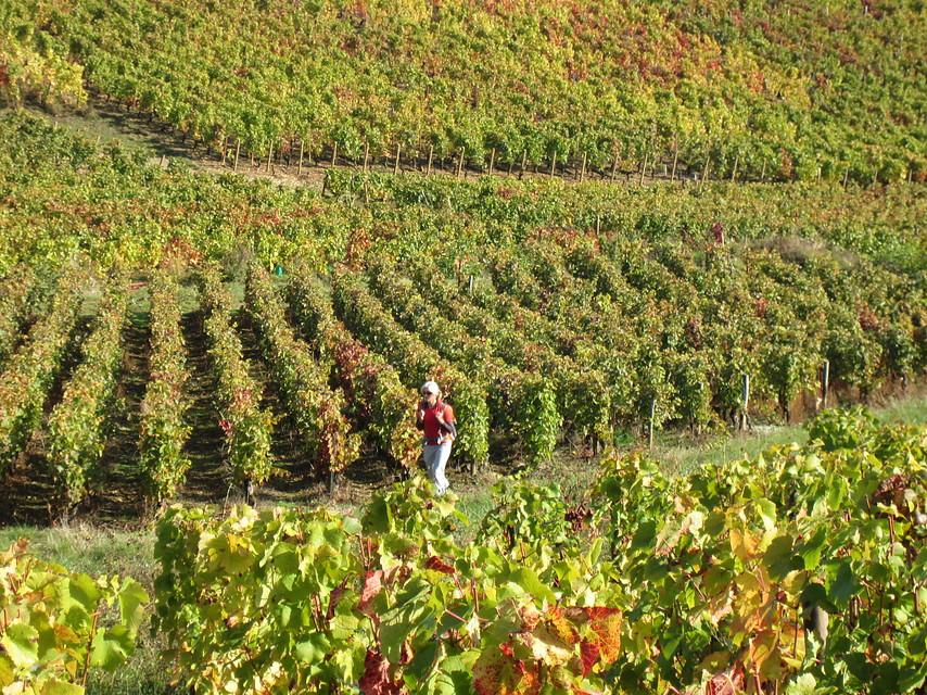 Wandelvakantie Frankrijk - Bourgogne in Flagey-Echézeaux (Bourgogne, Frankrijk)