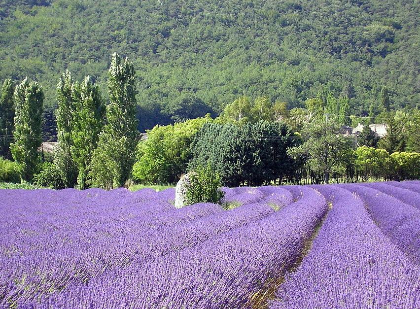 Frankrijk - Drôme Provençal