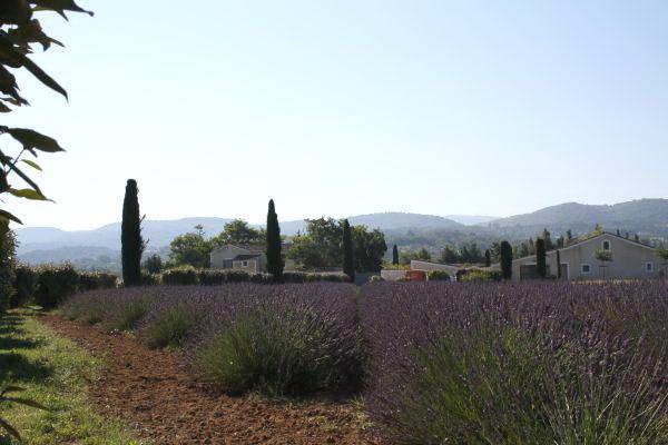 Sfeerimpressie Frankrijk - Provence