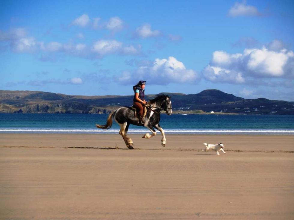 arnolds-hotel-dunfanaghy-horse-on-beach.jpg