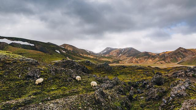 IJsland - Landmannalaugar & Thorsmörk