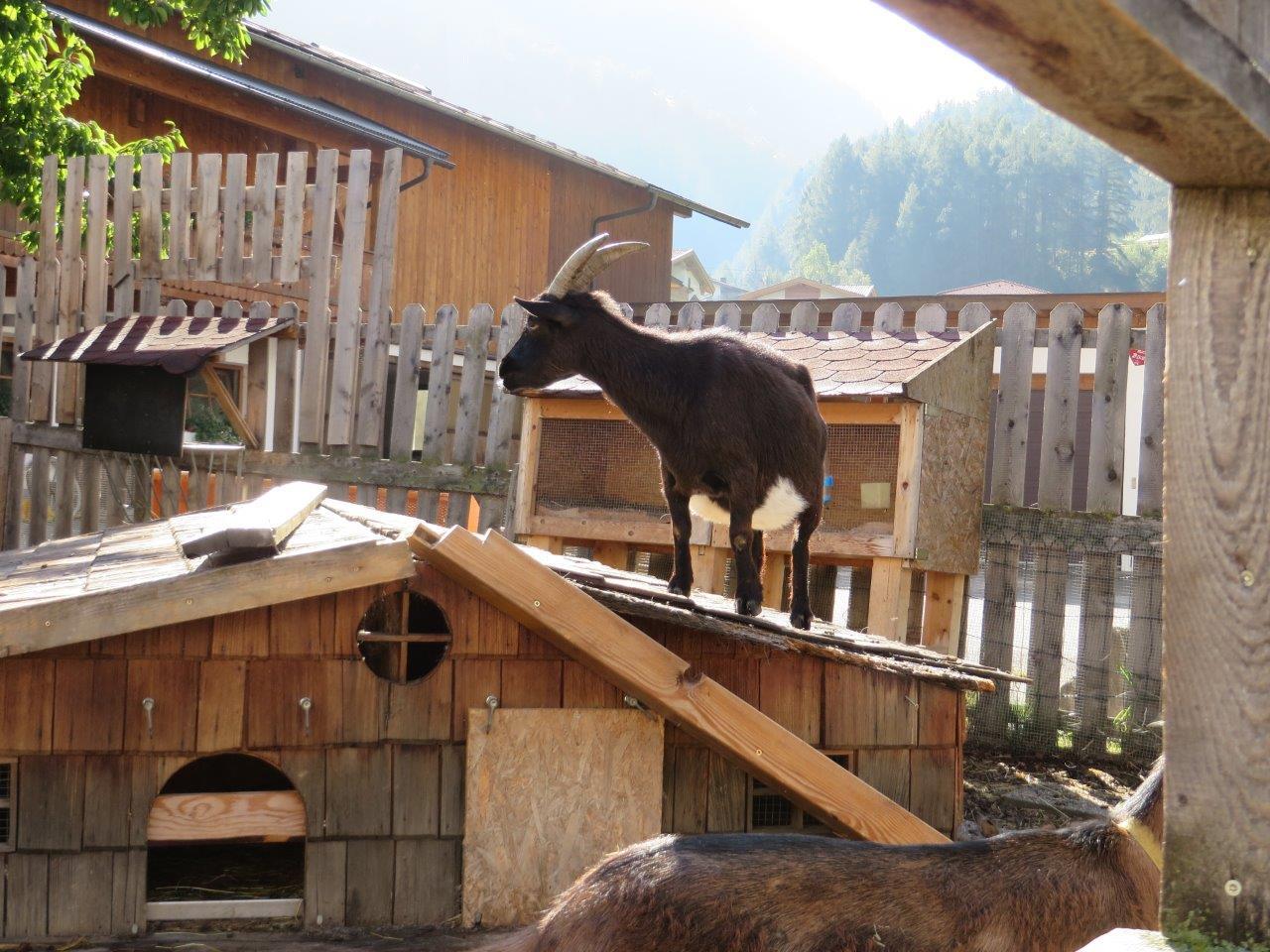 Tirol gezinsvakantie   vakantie met het gezin vanuit familiehotel   SNP Natuurreizen