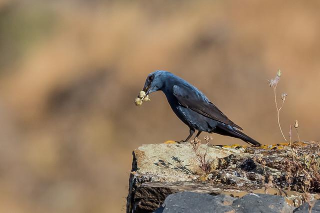 Alentejo Algarve vogelreis themareis langs hotels SNP Natuurreizen
