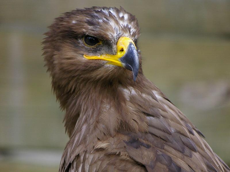 Spanje - Extremadura vogelreis