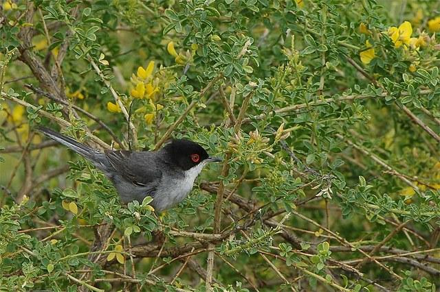 Vogels kijken Spanje - Extremadura vogelreis in Trujillo (Extremadura, Spanje)