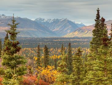 denali-autumn.jpg