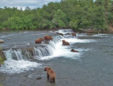 brooks_falls_in_katmai.jpg
