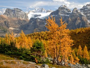 lark_valley_in_banff_np_in_de_herfst.jpg