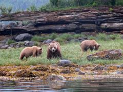 grizzlies_in_knight_inlet.jpg