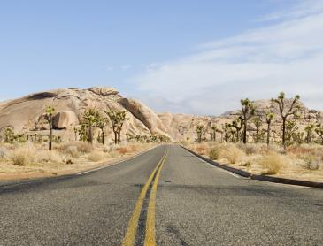 Joshua_tree_road.jpg