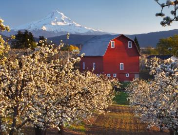 Columbia_River_Gorge_orchards.jpg
