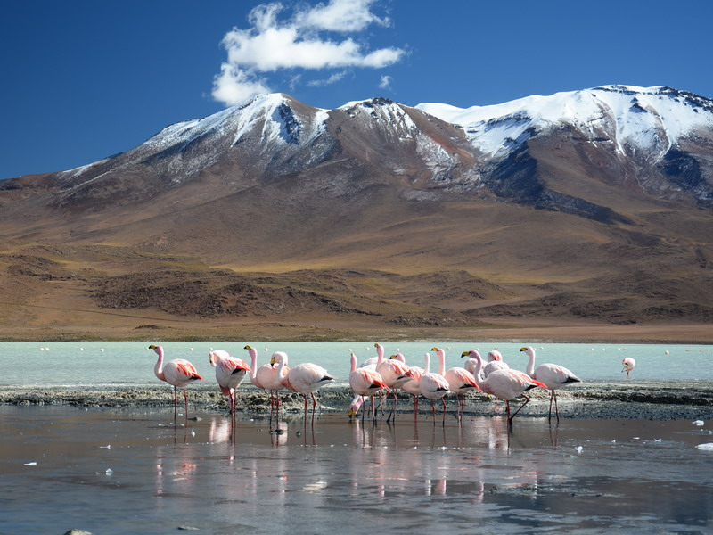 Argentinië - Altiplano