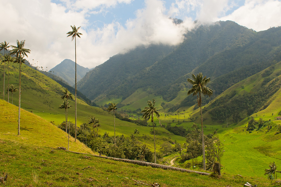 colombia-cocora.jpg