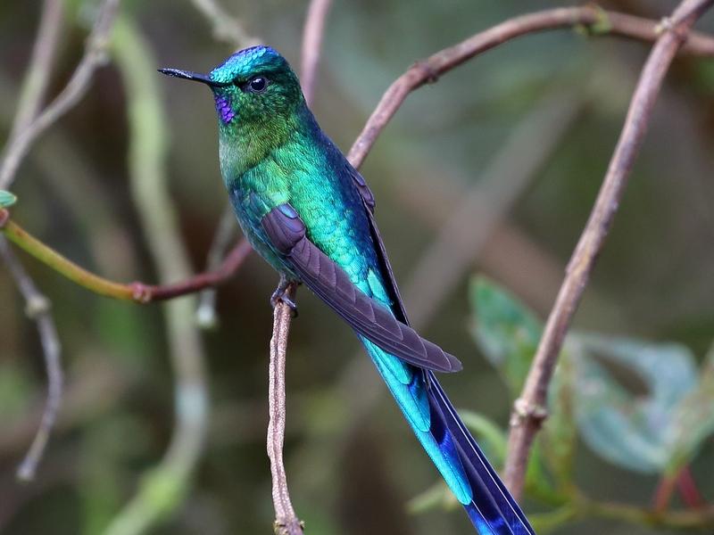 Ecuador - Vogelreis