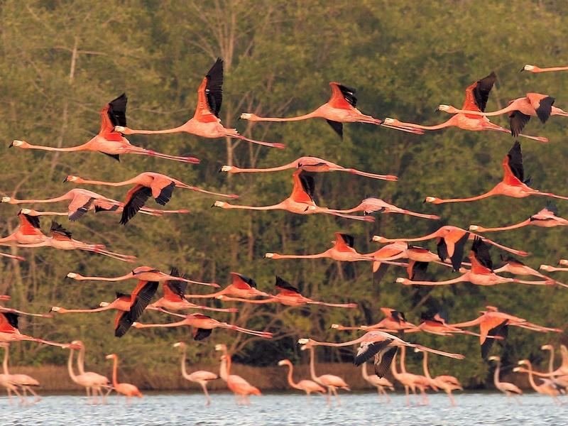 Online bestellen: Suriname - Vogel- en natuurreis